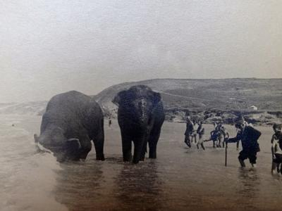 Elephants on Perranporth beach